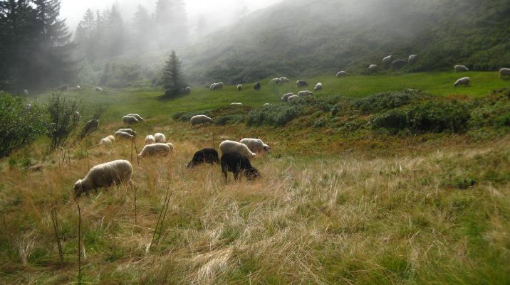 Col du Jaillet © montblancfamilyfun.com