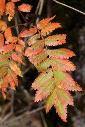 Réserve Naturelle des Contamines-Montjoie - autumn colours © montblancfamilyfun.com