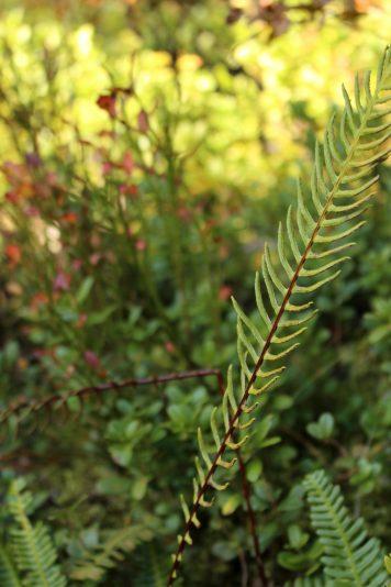 Sentier Découverte de la Forêt à Cordon - autumn © montblancfamilyfun.com