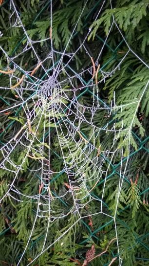 Winter spider web © montblancfamilyfun.com