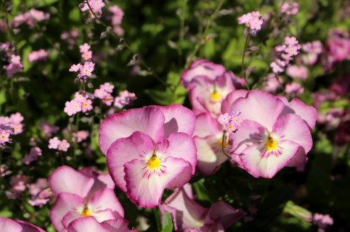 Les Golettes (Sallanches) in springtime © montblancfamilyfun.com