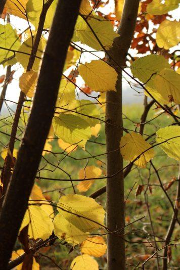 La Vigne (Sallanches) © montblancfamilyfun.com