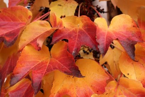 Along route de la Fley in autumn © montblancfamilyfun.com