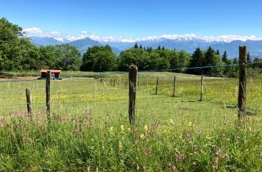 Le Salève family hike - alpine pasture & farms © montblancfamilyfun.com