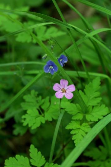 Woodland flora on the Salève © montblancfamilyfun.com