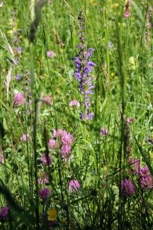 Alpine pastures on the Salève © montblancfamilyfun.com