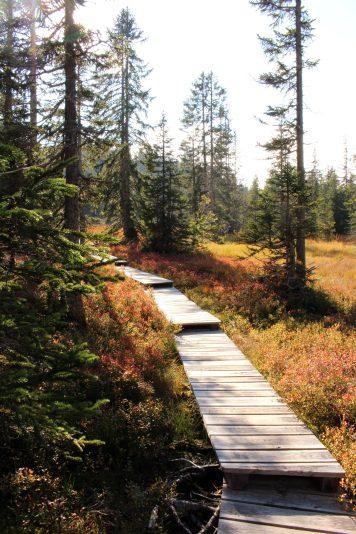 Sentier des Arpelières - wooden walkways (Crest-Voland / Les Saisies) @ montblancfamilyfun.com