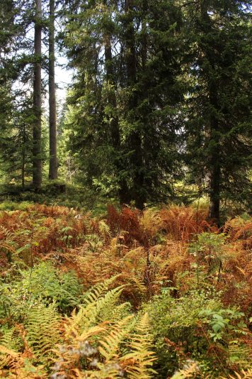 Sentier des Arpelières - the forest (Crest-Voland / Les Saisies) @ montblancfamilyfun.com